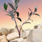 The seeds planted on Tisha b'Av