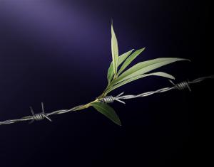 Wire Leaf_cropped_72dpi